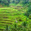 Bali, destination phare en Asie