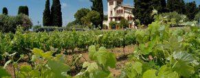À la découverte des meilleures régions viticoles d'Espagne
