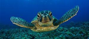 turtle-island-borneo-1