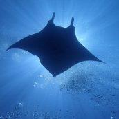 Voyage plongée aux Maldives