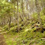 Parc national de Fundy - Arpenter le chemin