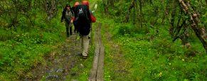 Aventure en Suède: 3 parcs nationaux à explorer en randonnée