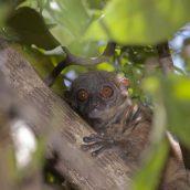 Visite de la réserve naturelle de Lokobe en pirogue à balancier