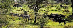 Le voyage safari est l'une des spécialités de la Tanzanie