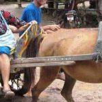 Circuit_Cambodge_Angkor