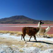 Voyager au Chili pour découvrir ses attractions touristiques remarquables