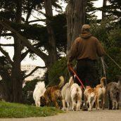 Comment faire garder son animal de compagnie pendant les périodes de vacances ?