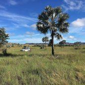 2 idées de circuits à réaliser au cours d'un séjour à Madagascar