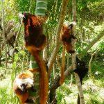 Lokobe nature special Madagascar