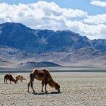 Mongolie, en Asie