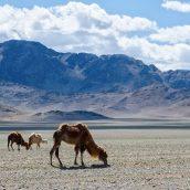 3 endroits fascinants à visiter lors d'un séjour en Mongolie