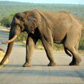 Visiter l'Afrique du Sud : comment profiter pleinement de son séjour ?