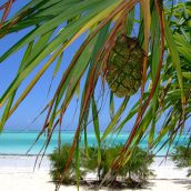 2 destinations à découvrir dans l'océan Indien