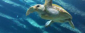 Plonger au cœur des plus beaux fonds marins des Bahamas