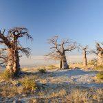 Kubu au Botswana, en Afrique