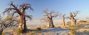 Séjour au Botswana, les choses à ne pas manquer