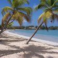 Salines, plage Martinique