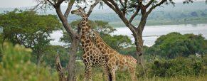 2 lieux où dormir lors d'un voyage en Ouganda