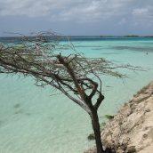 Explorer Aruba, le petit trésor des Caraïbes