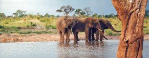 Séjour au Zimbabwe : 3 sites d'intérêt touristiques à visiter absolument