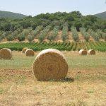 visite-toscane-activites