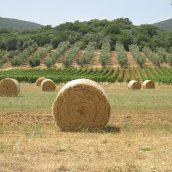 Visiter la Toscane: top5 des choses à faire et à voir