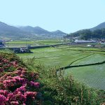 visite-jeolla-sud-activites