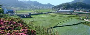 3 idées d'activités pour passer de bons moments dans le Jeolla du Sud