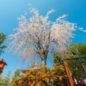 9 activités originales à faire pendant votre séjour au Japon