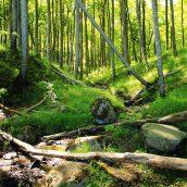 Voyage en Allemagne: 3 parcs nationaux à découvrir